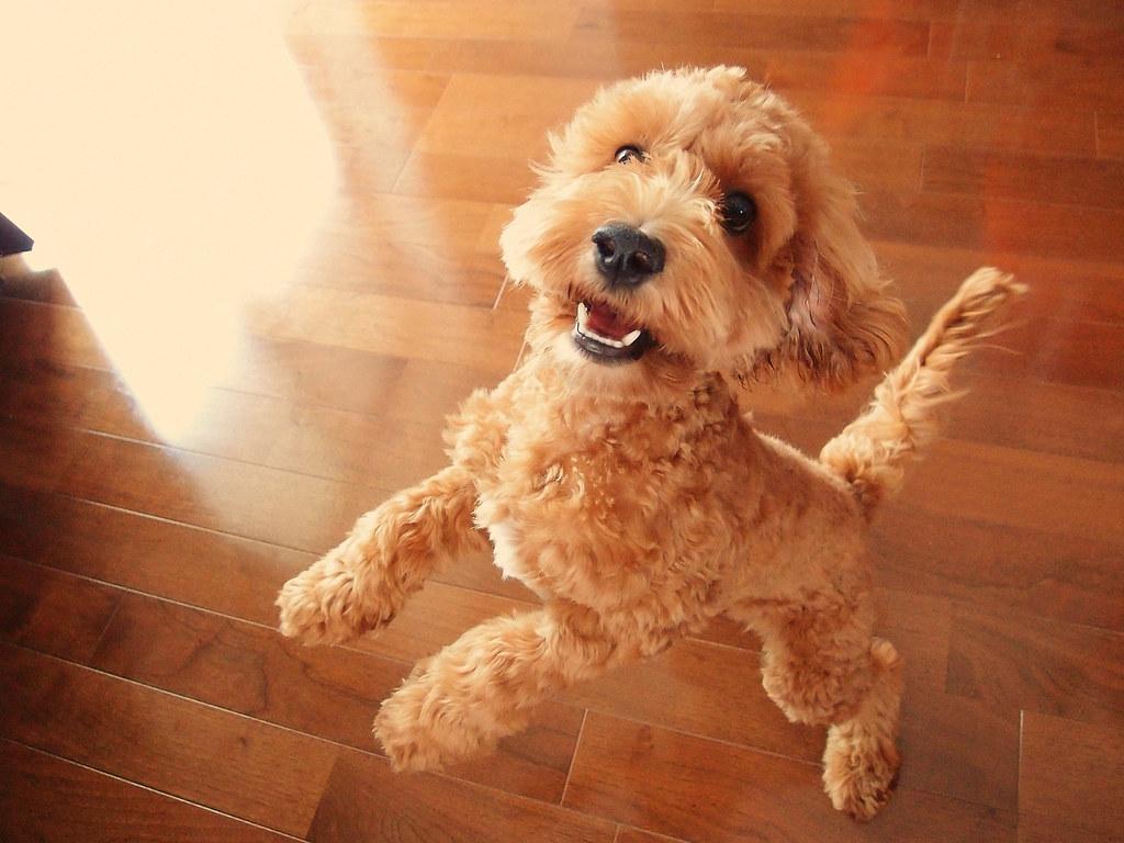 Cutest Dog Breeds In The World