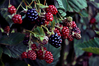 wild fruit | by raysnaps ☂
