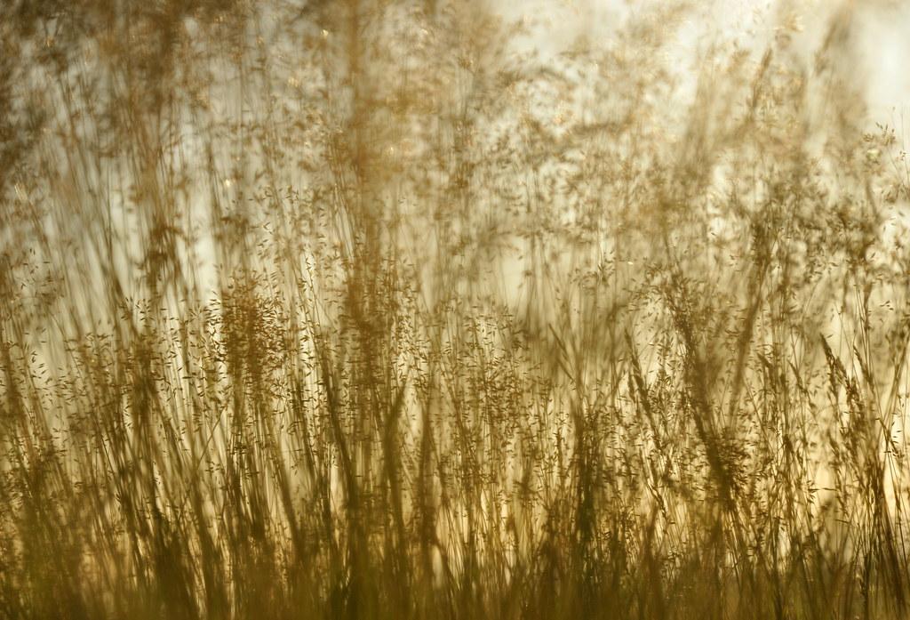 carl sandbergs grass essay
