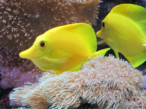 Happy Yellow Fish | by Heaven`s Gate (John)