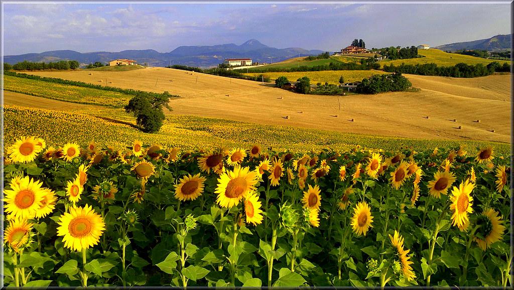 Paesaggio in giallo nella luce del mattino con nokia n8 for Foto paesaggi naturali gratis