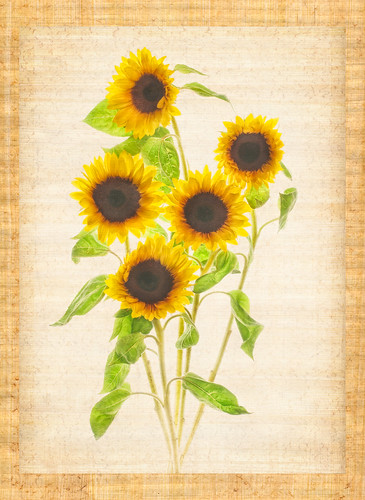 Sunflowers #5