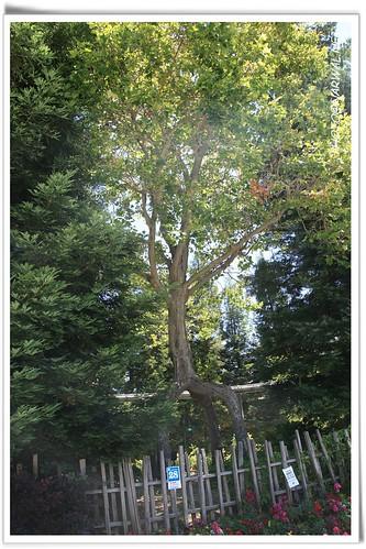 Circus tree gilroy gardens 3050 hecker pass hwy gilroy for Gilroy garden trees