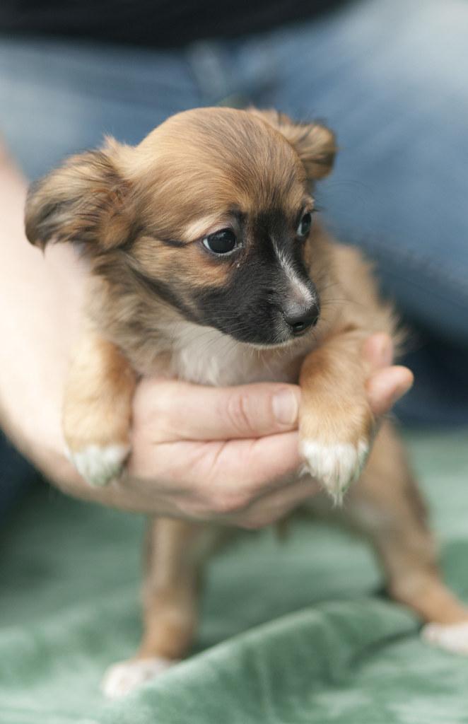 Dog Rescue Homes Perth Wa