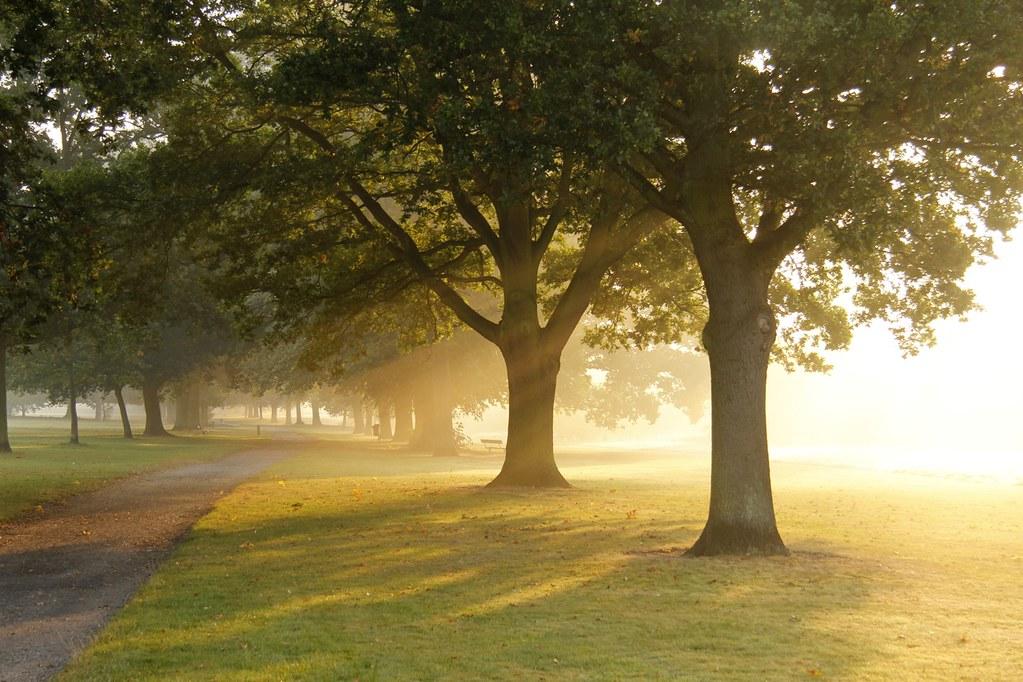 Bourne Park Ipswich Bourne Park Ipswich Morning