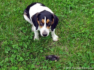 Bert and his mole 1 | by Farmgirl Susan