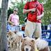 Bark in the Park 2011