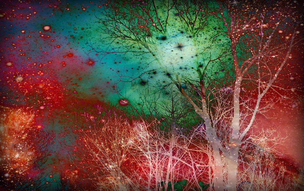 Trippy trees | Breanne Christmas | Flickr