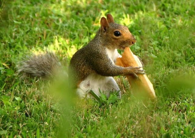 Hot Dog The Movie Squirrel