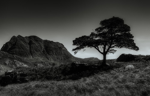 Lone Tree | by murphyz