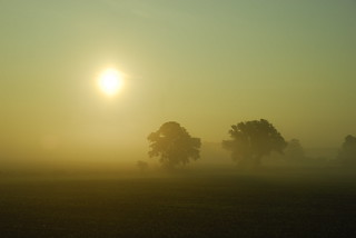 Foggy Sunrise | by fabnie