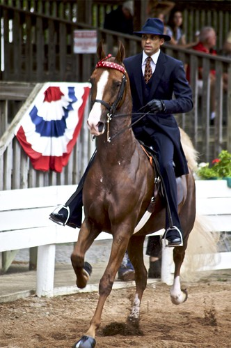 American Saddlebred | by Just chaos