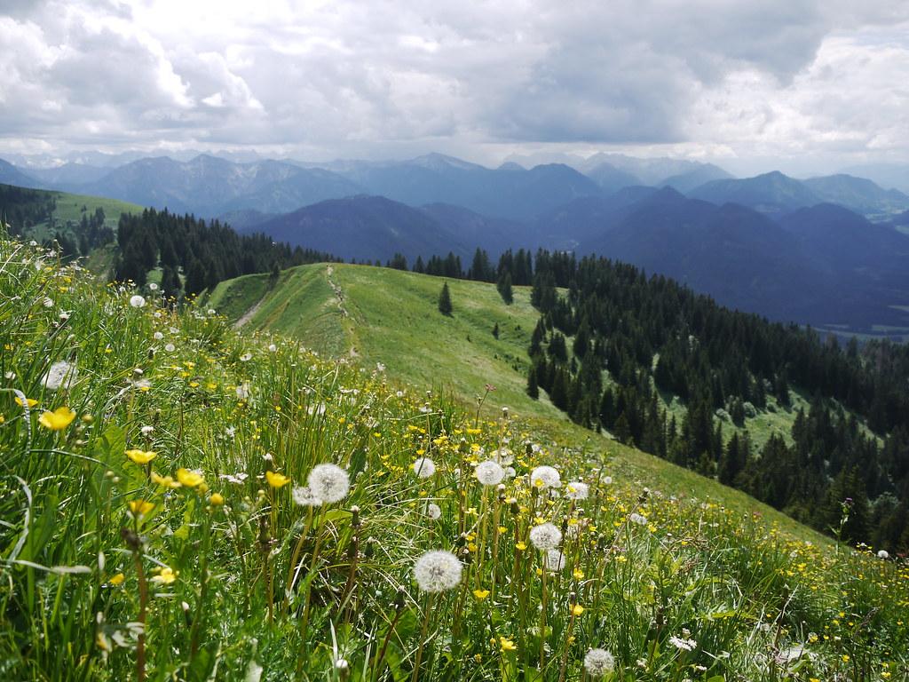 Spring Flower Alpen Alps Bavaria Nature Bayern Natur Flickr