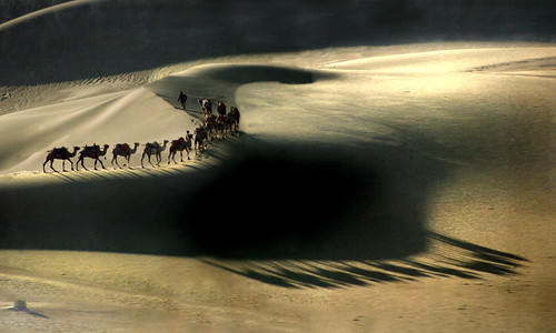 8011 Shadows of camels--The Gobi Desert . China | by ngchongkin