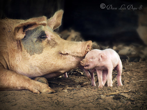 Mother's Love | by Lizduquesa