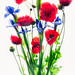 Poppies and Iris on White