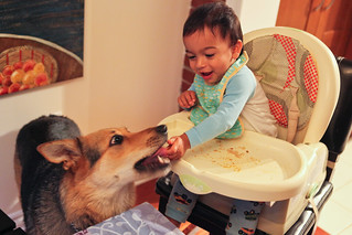 Baby Feeds Dog | by Anirudh Koul