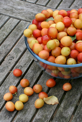 Mirabelle Plums | by monica.shaw