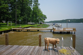 A dog named Mud / Lake Sinclair, Georgia - July 3, 2011 | by steveartist