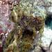 087_adj_DSC0844 octopus