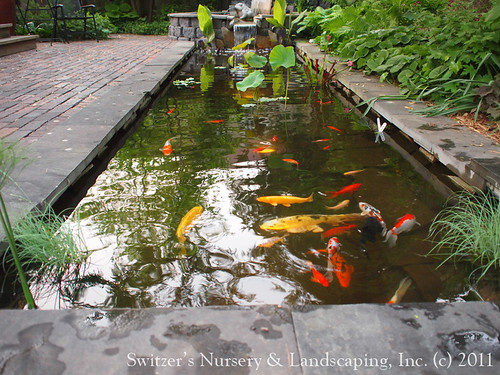 Minnesota landscape design inspired by bali natural ston for Koi pool water gardens blackpool