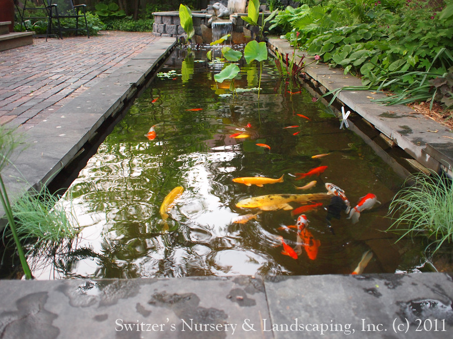 Minnesota landscape design inspired by bali natural ston for Natural koi pond