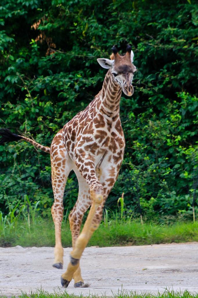 Nashville Zoo At Grassmere Nashville Zoo At Grassmere
