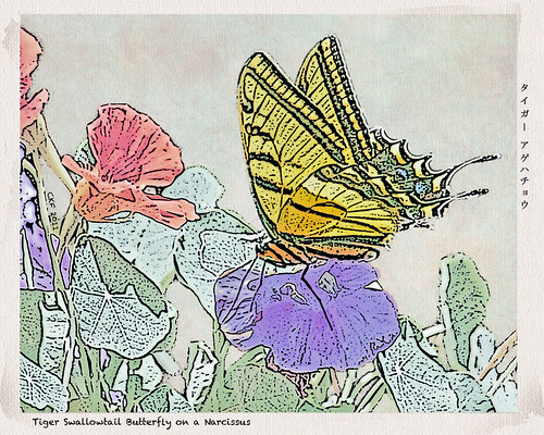 Tiger Swallowtail Butterfly - Woodblock | by Fergiemoto