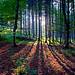 Im Wald - EXPLORE