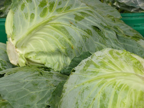 Cabbage | by swampkitty