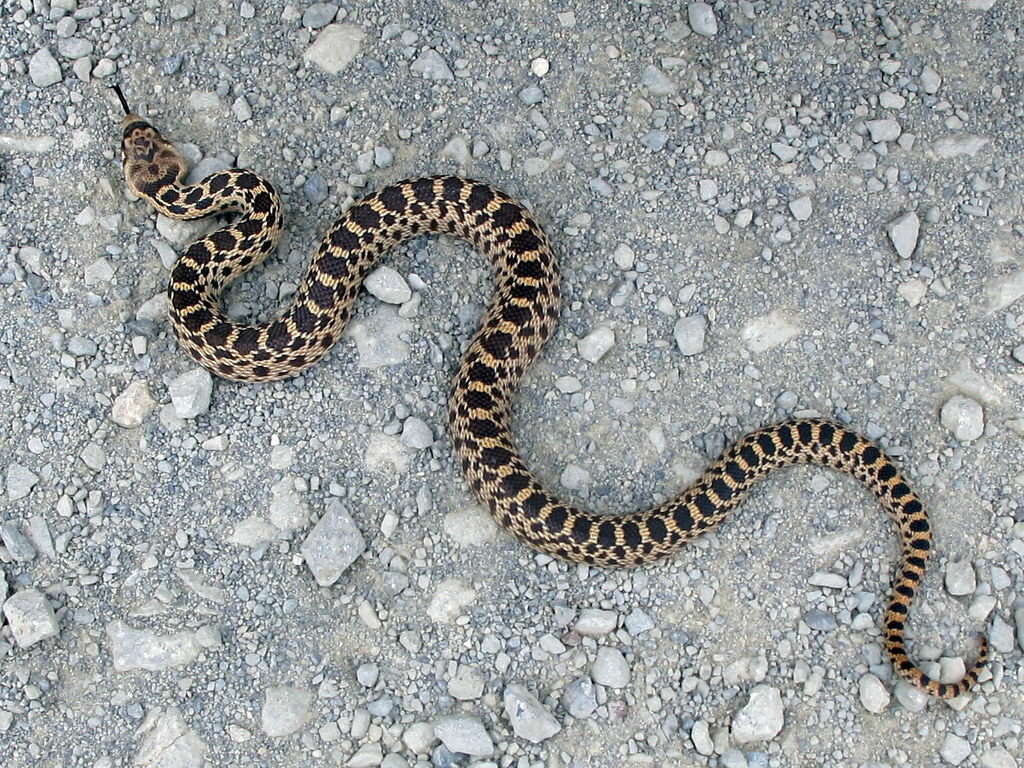 Snake king pictures baby