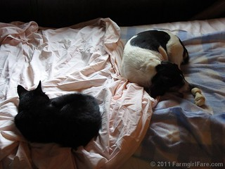 Mr. Midnight and Beagle Bert sacked out on the daybed 1 | by Farmgirl Susan