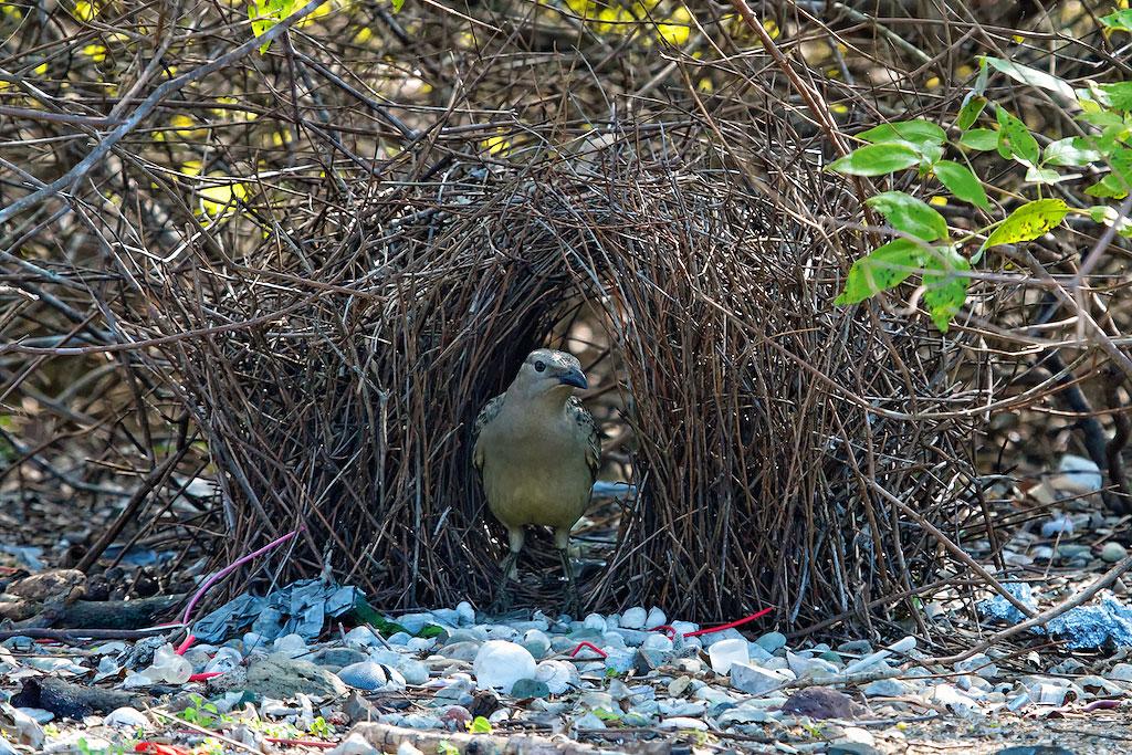 Dating nest