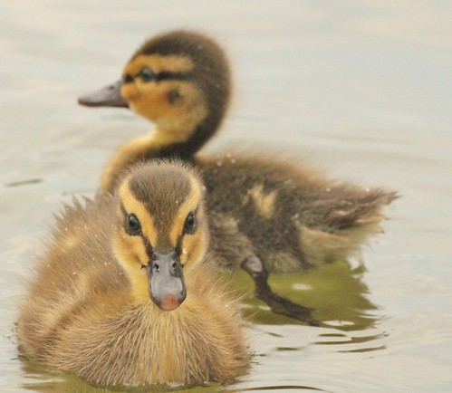 Oh hi! Have you come to welcome us to the world? | by Ducklover Bonnie