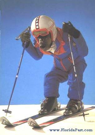 snow ski monkey   1.....2.....3.....   SnapShotPhotographs.com ... Snow