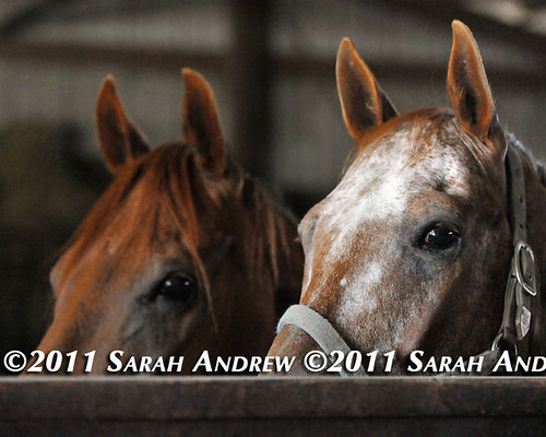 See | by Rock and Racehorses
