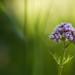 Wildflower II [Explored]