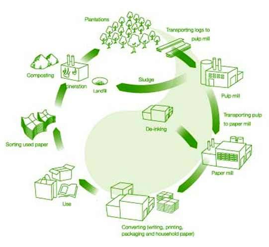 environmental impact of paper production The environmental impact of paper and its production on the environment is significant here are some surprising facts paper accounts for 34% of the municipal waste stream you can help reduce the environmental impact of paper and save money while increasing efficiencies.
