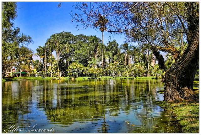 fotos jardim botanico porto alegre : fotos jardim botanico porto alegre:Jardim Botanico Porto Alegre