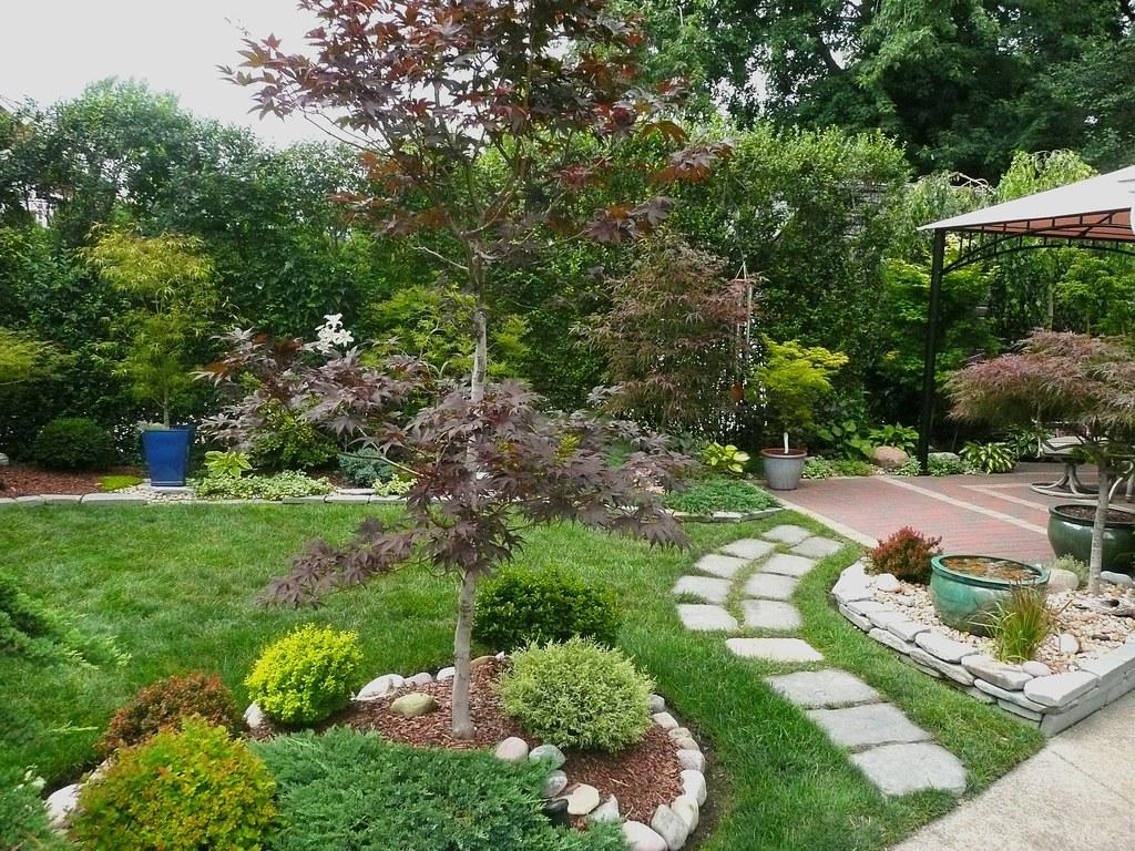 Maple Garden Acer Palmatum Emperor I Magic Car Flickr