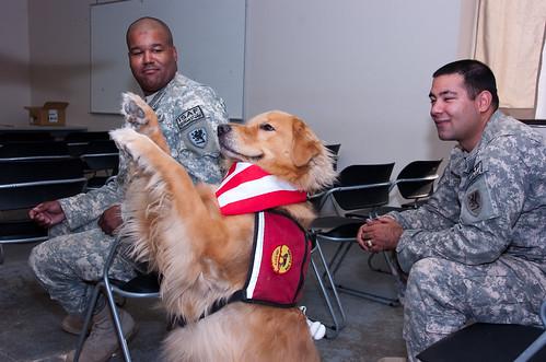 Dog Training Detroit Lakes Mn