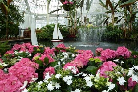 Spring flower show 2011 phipps conservatory flickr spring flower show 2011 by phipps conservatory mightylinksfo