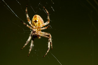 Porch spider 2011 | by Dan Hontz
