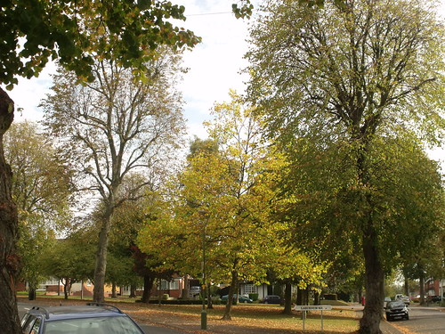 Green triangle - Bournville - Laburnum Road - trees in autumn | by ell brown