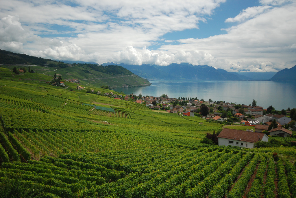 Lavaux: Cully
