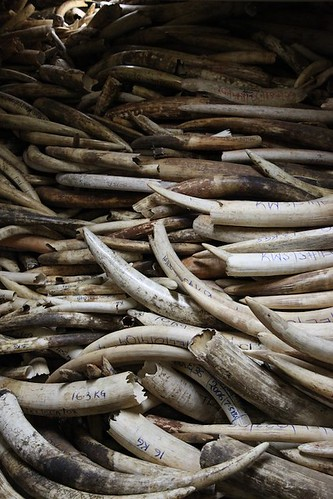 Illegal Wildlife Trade | by Environmental Investigation Agency (EIA)