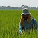 farmer uses chemical spray