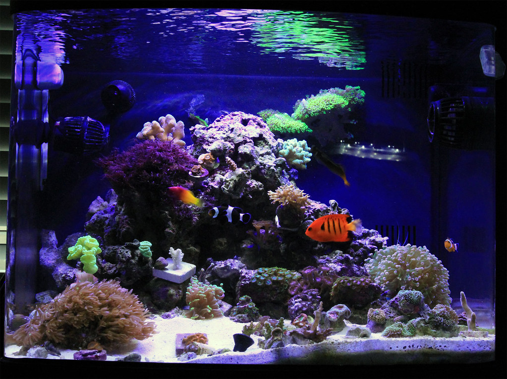 which fish tank