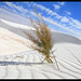 White Sand Blue Sky
