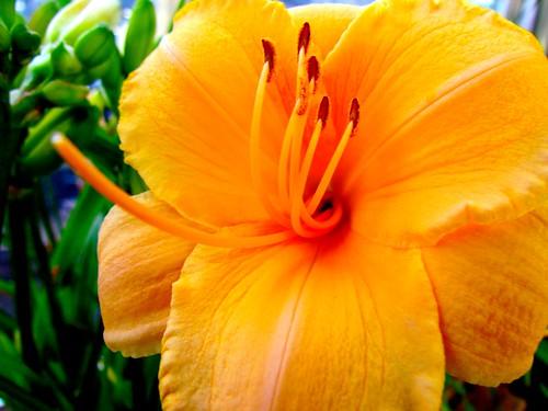 Coeur en forme de serpents fleur macro coeur en forme de s flickr - Fleur en forme de coeur ...